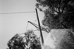 Utility pole (Matthew Paul Argall) Tags: hanimex35es 35mmfilm blackandwhite blackandwhitefilm kentmerepan100 100isofilm utilitypole