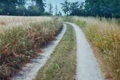 (Claudia Voglhuber) Tags: 35mm analog film zenite path nature