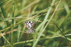 (Claudia Voglhuber) Tags: butterflies 35mm analog film zenite