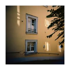 windows & windows' reflections (Armin Fuchs) Tags: film analog windows light house tree green 6x6 yellow mediumformat square holga neighborhood würzburg 120mm ektar mittelformat arminfuchs burkarderstrase lavillelaplusdangereuse