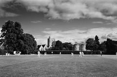 Photo of Cricket at Bray