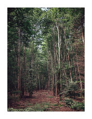 In the haunted Woods (Thomas Listl) Tags: thomaslistl color wood woods forest trees nature flora mood magic green earth steinenbronn atmosphere