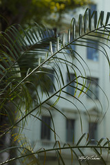Havana_MG_6019 (Alfred J. Lockwood Photography) Tags: abstract travel spring cuba havana parquecentral architecture afternoon alfredjlockwood streetphotography bokeh building palmtrees shapes color patterns