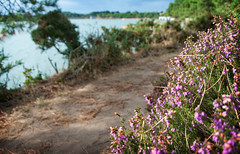 sur le sentier côtier... (.Sophie C.) Tags: baden 56 morbihan bretagne breizh pointedetoulvern littoral mer côte golfedumorbihan ansedebaden