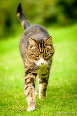 cats 'n dogs - playing with ISO-4 (grahamrobb888) Tags: pet pets animal mammal garden gardenbokeh homegarden tighnabeithe grahamrobbphotos nikon nikkor nikond500 d500 80200mm af80200mmf28 iso perthshire scotland highlands birnam birnamwood birnamhill relaxed easygoing patience