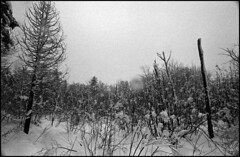 (Armin Schuhmann) Tags: 2018 winter praktica mtl mtl3 carl carlzeissjena carlzeiss zeiss jena czj flektogon 20mm f4 204 420 vintagecamera vintagelens vintage agfa apx 400asa apx400 rodinal 1100 yellowfilter scan selfdeveloped shootfilm schwarzweiss sw screwmount schwarzweis m42 argentique analogue analog analogic analogico analogo analogica filmisnotdead filmphotography filmscan filmphoto film filme ishootfilm believeinfilm buyfilmnotmegapixels bw blackandwhite noiretblanc northeast pelicula estrie easterntownships quebec canada landscape countryside snow trees backcountry forest field nature