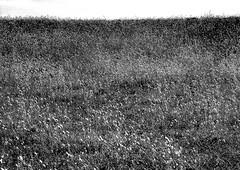 LightSpots2.jpg (Klaus Ressmann) Tags: klaus ressmann abstract fhoedic france landscape meadow nikon spring blackandwhite design flcnat minimal pattern texture klausressmann