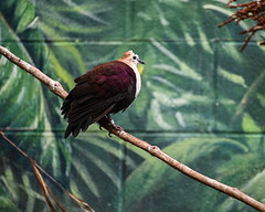 08-19-2019_Z6_colzoo_DSC_0445.jpg (gryphon1911 [A.Live]) Tags: bird columbus zoo australia aquarium bestlightphoto blp