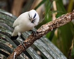 08-19-2019_Z6_colzoo_DSC_0469.jpg (gryphon1911 [A.Live]) Tags: blp australia bestlightphoto bahly zoo aquarium bird columbus mina