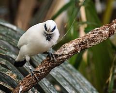 08-19-2019_Z6_colzoo_DSC_0471.jpg (gryphon1911 [A.Live]) Tags: blp australia bestlightphoto bahly zoo aquarium bird columbus mina