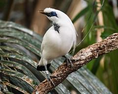 08-19-2019_Z6_colzoo_DSC_0473.jpg (gryphon1911 [A.Live]) Tags: blp australia bestlightphoto bahly zoo aquarium bird columbus mina