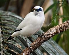 08-19-2019_Z6_colzoo_DSC_0498.jpg (gryphon1911 [A.Live]) Tags: blp australia bestlightphoto bahly zoo aquarium bird columbus mina