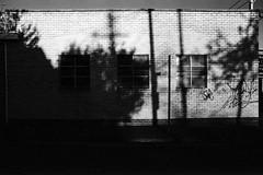 Oblong (OzGFK) Tags: 35mm fitzroynorth kodaktrix nikkor nikonf3 trix analog blackandwhite film monochrome contrast shadowandlight redfilter brightday