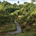 Sylheti tea plantations