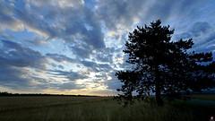 PAYSAGES DE PICARDIE 082 (aittouarsalain) Tags: landscape paysage aurore aube leverdesoleil pointdujour arbre nuages picardie