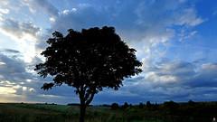 PAYSAGES DE PICARDIE 081 (aittouarsalain) Tags: picardie oayasage landscape arbre nuages aurore aube point du jour campagne