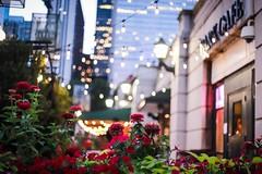 park cafe (Yuki (8-ballmabelleamie)) Tags: millenniumpark cafe restaurant bar evening summer afterdark city urban downtown chicago 50mmlens manualfocus flowerbed flowers light bokeh