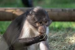Eating (John Fenner) Tags: olympusem1 markii mzuiko 40150mm f28 pro zoom london zoo regents park animals nature