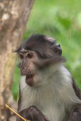Surprise (John Fenner) Tags: olympusem1 markii mzuiko 40150mm f28 pro zoom london zoo regents park animals nature