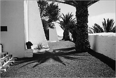 Palmschatten (Ulla M.) Tags: sw bw schwarzweis blackandwhite bnw umphotoart palmtree palm palme schatten shadow rodinal agfafilm agfaapx100 selbstentwickelt selfdeveloped homedeveloped 35mm kleinbild reflectaproscan10t grain