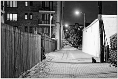 2019/231: Alley Cat (Rex Block) Tags: nikon d750 dslr 50mm f18g washington dc alley cat black blackcat night highiso monochrome bw project365 365the2019edition 3652019 day231365 19aug19 ekkidee 2019231alleycat