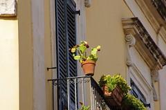 387 Sicile Juillet 2019 - Syracuse, Ortigia, les balcons Via Castello Maniace (paspog) Tags: sicile sicilia sicily ortigia syracuse juli july juillet 2019 balcons balconies balcony balkonen viacastellomaniace