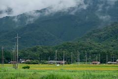 20190820a7r3_9761 (Gansan00) Tags: ilce7rm3 α7rⅲ sony japan 日本 snaps ブラリ旅 landscape rain 8月 yamaguchi tokusa 山口県 徳佐 稲 fe70200f4