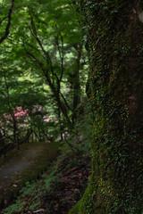 20190820a7r3_9828 (Gansan00) Tags: ilce7rm3 α7rⅲ sony japan 日本 snaps ブラリ旅 landscape rain 8月 tokusa zeiss 島根県 津和野 fe55f18