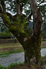 20190820a7r3_9807 (Gansan00) Tags: ilce7rm3 α7rⅲ sony japan 日本 snaps ブラリ旅 landscape rain 8月 yamaguchi tokusa zeiss 島根県 津和野 fe55f18