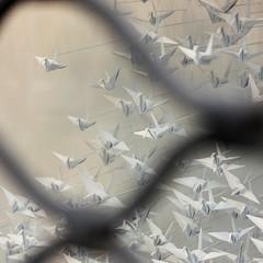(Christelle Diawara) Tags: galeriedutko paris vitrine art prendresonenvol oiseaux birds origami papier paper