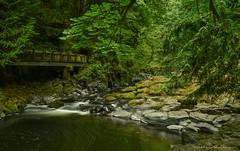 Cedar Grist Mill View-Every Shade of Green (CindyFullwiler Nature Photography) Tags: cedar grist mill shadesofgreen creek slow shutter rocks trees