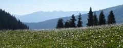 When It Was Spring (bookhouse boy) Tags: berge mountains alpen alps 2019 20juli2019 tuxeralpen fügenberg hochfügen schellenbergalm loas loassattel kleinergamsstein grosergamsstein gilfert spitzlahn