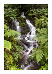 C A S C A D E (Andrew Hocking Photography) Tags: melincourt falls waterfall southwales wales woods forest river cascade green foliage slowshutter landscape outdoor nature lush rain uk gb ferns rush water stream