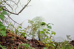 """Au bord de l'eau, après la pluie (Brigitte .. . """"Tatie Clic"""") Tags: 2015080939 août été eau herbe nature prêle brindilles feuillesmortes lotetgaronne aquitaine francesudouest"""