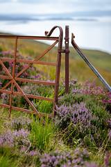 Heather Season (AnnieMacD) Tags: heather gate rusty applecross sandpath westerross