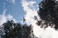 Looking up (Douglas Jarvis) Tags: film yashica electro 35mm sky trees plane aeroplane