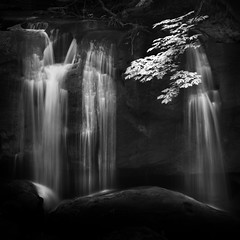 Whatcom Falls (nlwirth) Tags: nlwirth yup water waterfall rocks light leaves branch whatcom park bellingham washington longexposure blackandwhite infrared ir whatcomfalls