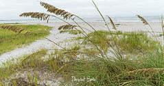 Sanibel (Daryshoot) Tags: sanibel daryshoot floride florida usa coquillage america