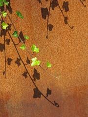ivy | rust (vertblu) Tags: ivy leaves shadows shadow rust rusty rustpatterns ferricoxide ferrousoxide oxidation ironoxide iron vertblu green orange brown texture textur textures simple simpleyeteffective boldandsimple plainandsimple
