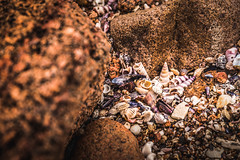 Treasures of Freycinet. (catrall) Tags: australia australien nikon d750 fx sigma lens 24105 february 2019 art tasmania tasmanien nature landscape rock sea water beach bay nationalpark freycinet colesbay treasure treasures shell shells mussel mussels seashell seashells