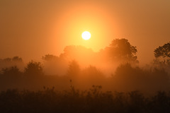 Sunrise at Stodmarsh (robin elliott photography) Tags: sunrise sun heat hot holiday outside outdoors landscape silhouette shadow dawn weather haze orange light