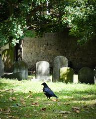 Lauriston Road, Jewish Cemetery (London Less Travelled) Tags: uk unitedkingdom britain england london eastlondon towerhamlets bethnalgreen hackney street suburb suburbs suburban suburbia city cemetery crow jewish lauristonroad
