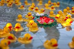 Duckie, Duckie, Lily! (Karol A Olson) Tags: howardcounty maryland howardcountyfair fair duckies water game 37ducks 119picturesin2019