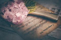 Composition Nº 5 (Ro Cafe) Tags: stilllife musicsheet harmonica flower hydrangea vintage romantic naturallight pink textured vintagelens helios442 sonya7iii