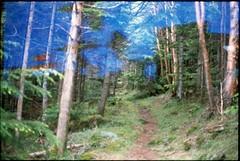 (✞bens▲n) Tags: pentax mzs provia 100f fa 43mm f19 limited film analogue slide multiexposure trees woods nagano japan path