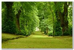 The Moss Walk #2 (Oul Gundog) Tags: hillsborough castle co down ireland royal queen grounds garden walk temple moss trees northern