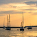 Morning gold over Vineyard Haven Harbor