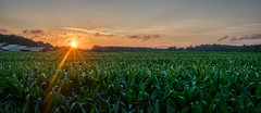 A Corny Sunset (tquist24) Tags: connecticut hdr nikon nikond5300 outdoor agriculture clouds corn cornfield evening farm geotagged rural sky summer sun sunburst sunset