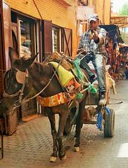 Not everyone appreciates Street Photography - The Medina, Marrakesh, Morocco (TravelsWithDan) Tags: man donkey cart laneway passage streetportrait city urban angry thefinger canong3x marrekech morocco africa