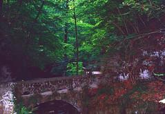 Verena Gorge (Bephep2010) Tags: 2019 bridge brücke bäume feldbrunnenstniklaus lomography lomographycolornegative400 olympus olympusafzoom35180mm145156 olympusis3 olympusis3000 photoexif schlucht schweiz solothurn sommer switzerland verena wald analog analogue forest gorge summer trees rüttenen kantonsolothurn